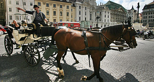 Plenty of things to see in Vienna