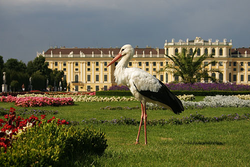 A stork has landed in front of Schönbrunn Palace